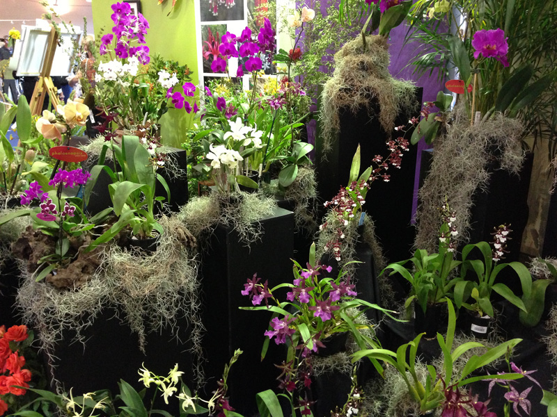 easter-show-flowers-2013-12