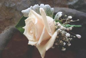 buttonhole, sahara rose, gypsophila, dusty millers
